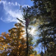 Trees with fall colors, next to pine trees. The sun peaks through just behind them.